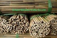 bamboo cane 1