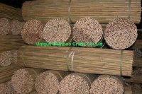 bamboo cane 2