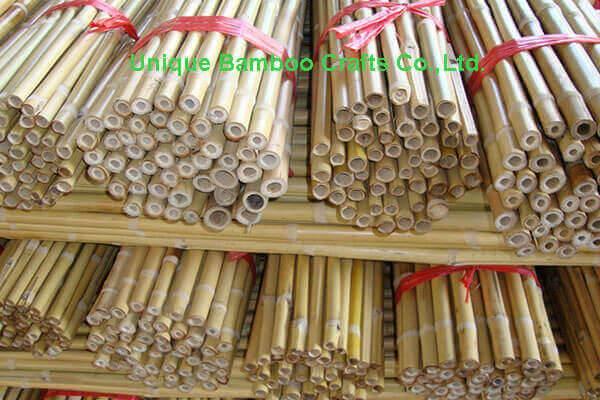 bamboo cane 3