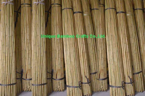 bamboo cane 4