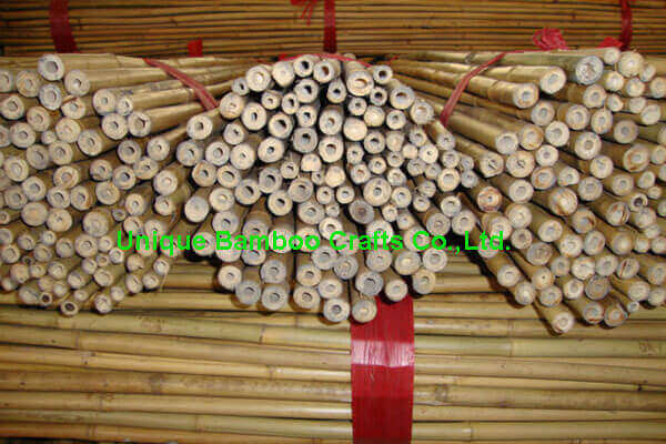 bamboo canes 1
