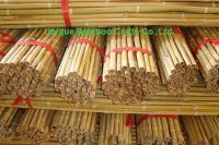bamboo canes 2