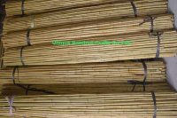 bamboo canes 3