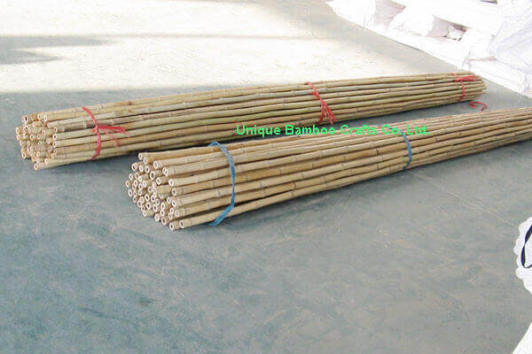 bamboo canes 4